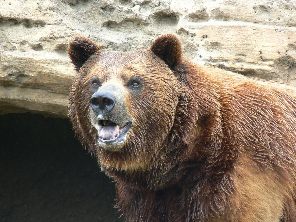 4 Animal Attractions in Wichita, KS - Davis-Moore Chrysler ...